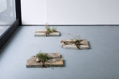 broken paving slabs with plant life growing out from in between their cracks