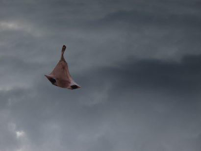 Nose-Kite-1.jpg