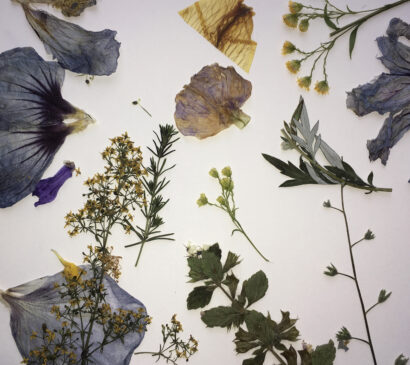 Dried flowers on a white background