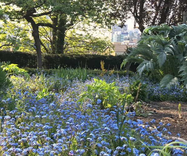 A landscape photo of Park Hill Park gardens full of bright blue flowers.
