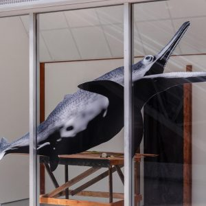 Hazel Brill, 'Shonisaurus Popularis'  Image by Tim Bowditch