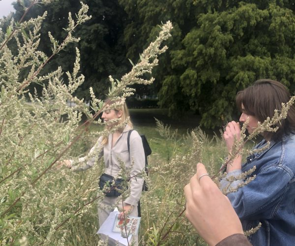 A group of people touch tall plants
